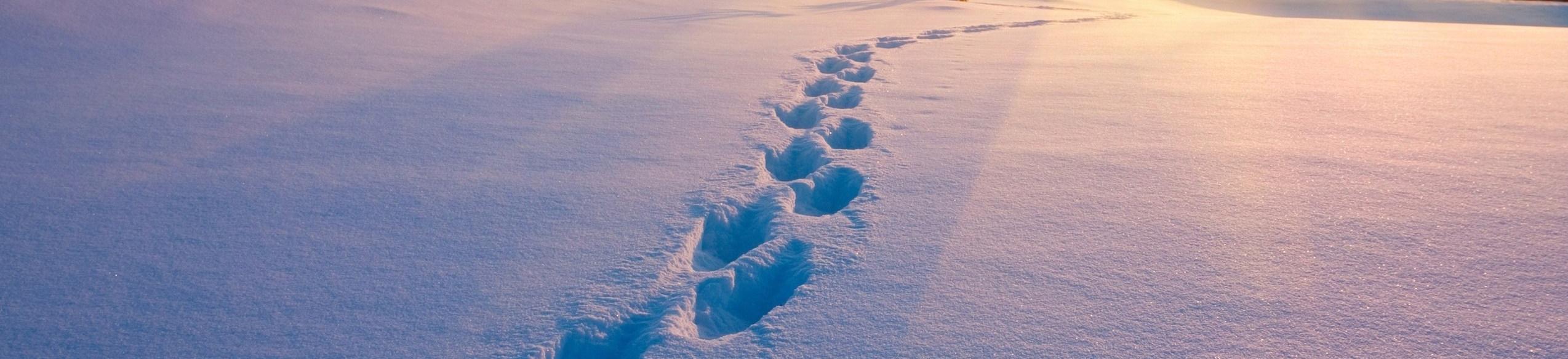 Footprints in Snow 2